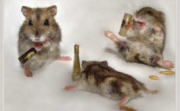 pijane-chomiki-alkoholik-dda