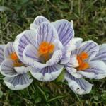Wiosenne zmiany