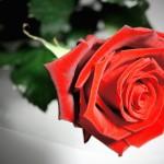 Walentynki – pomysły dla singla