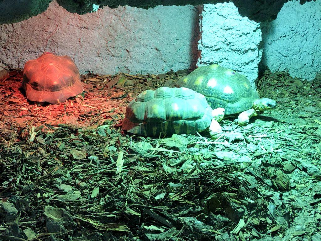 Poznańskie ZOO żółwie